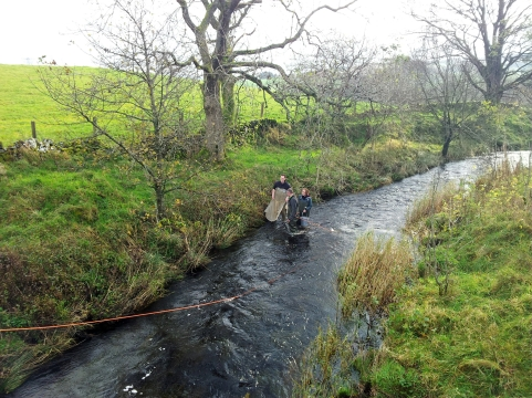 Electro fishing in the Gryfe