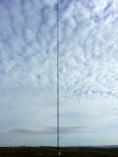 50m tall
