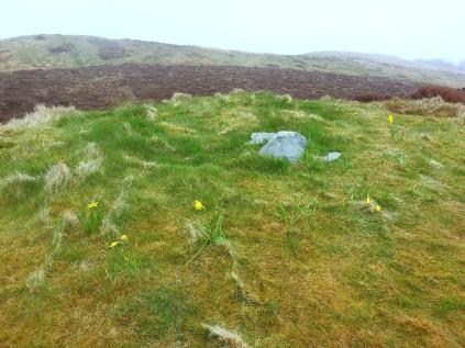 Daffodils on summit
