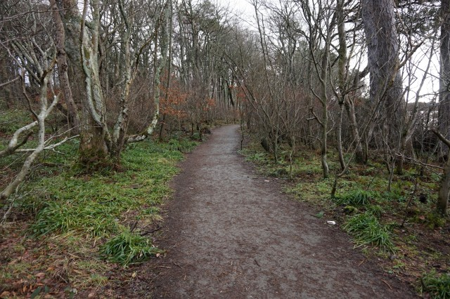 Route 753 Lunderson Bay to Inverkip woodland section
