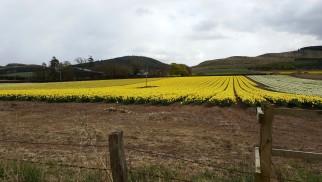 Bulb field 2