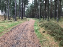 Tentsmuir Forest track